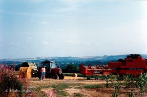 Barley Harvest Folly Hill 3