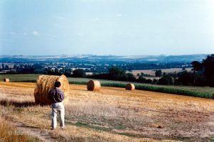 Barley Harvest Folly Hill 4