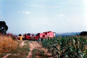 Barley Harvest Folly Hill 6