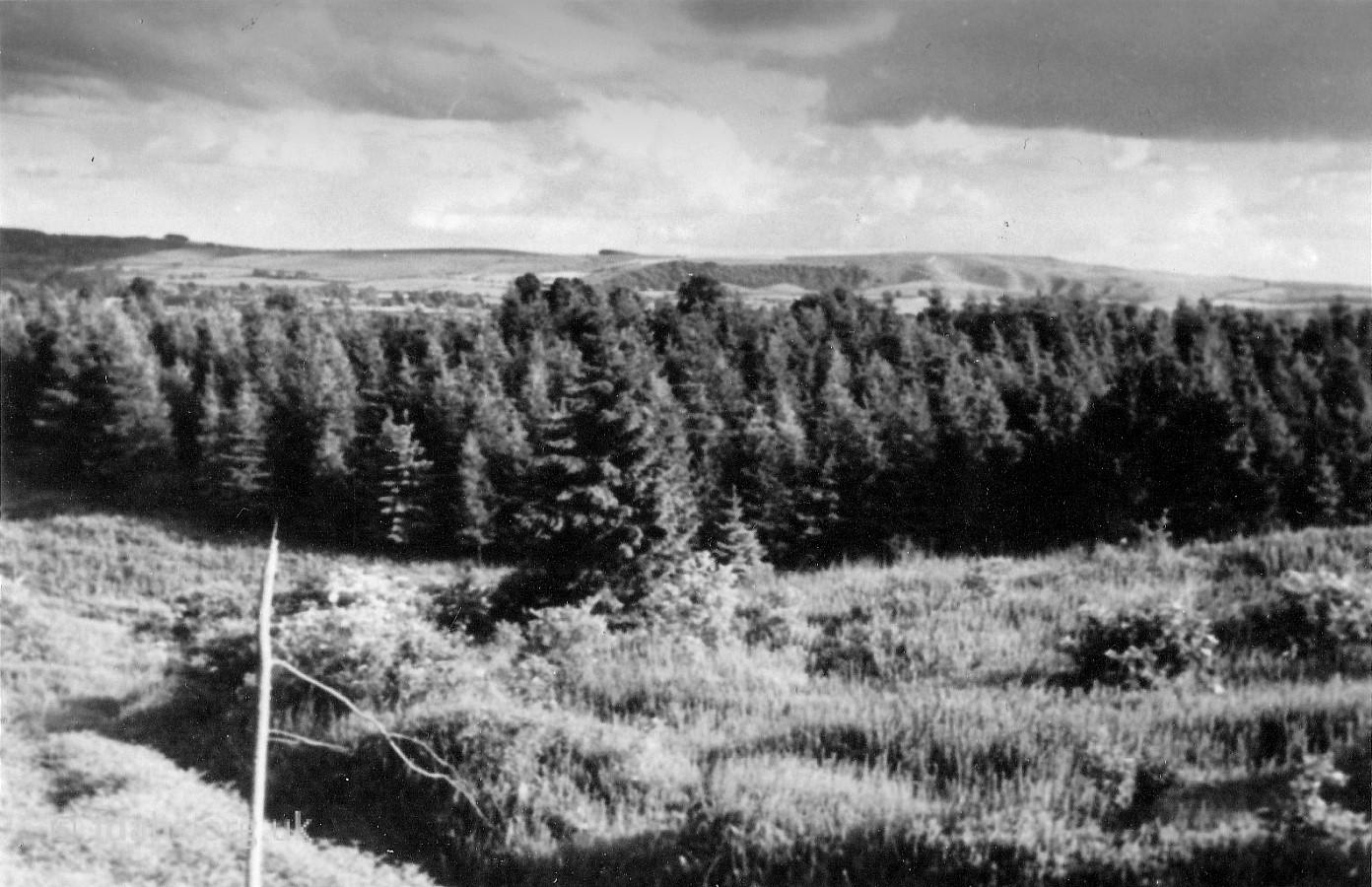 Coles Pits 1953