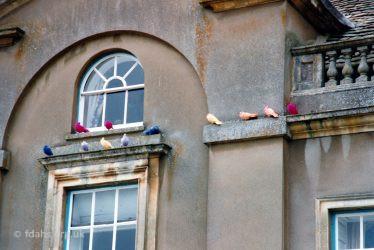 Faringdon House Pigeons
