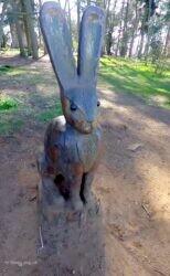 Folly Hare 2021