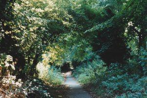 Folly Hill Path C1994