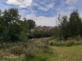 Folly Park 2020