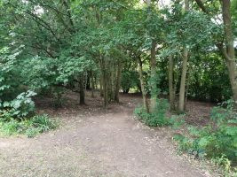 Folly Park Woodland Walks 2020