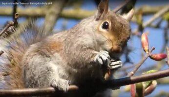 Folly Squirrel 2021
