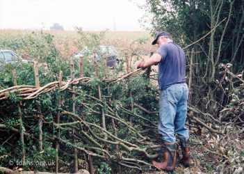 Hedgelaying 1998