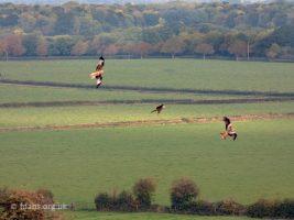 Highworth Road Red Kites 2020