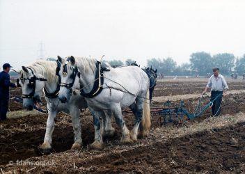 Horses Ploughing 1998